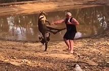 Kangaroo tung cước đá người đàn ông Australia ngã ngửa