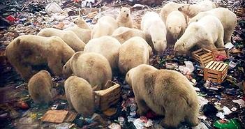 """50 con gấu đói Bắc Cực """"xâm chiếm"""", """"đại náo"""" ngôi làng Nga"""