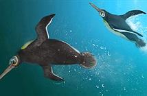 Phát hiện loài chim cánh cụt cổ đại ở New Zealand