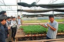 Nông nghiệp công nghệ cao đạt 2,5 tỷ đồng/ha/năm