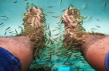 10 năm không rửa chân, người đàn ông khiến cá trúng độc chết sặc