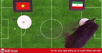 """Mèo """"tiên tri"""" Cass dự đoán sốc kết quả trận Việt Nam vs Iran"""
