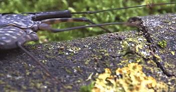 Loài nhện 300 triệu năm tuổi có hình dạng đáng sợ