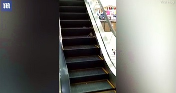 Chuột khổng lồ tấn công khách đi thang máy trong siêu thị