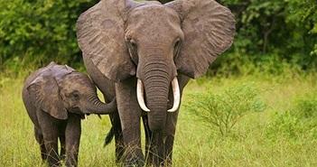 To xác như voi lại sợ thứ nhỏ xíu này