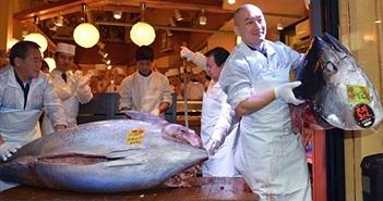 Loài cá đắt nhất nhì thế giới này sắp bị tuyệt chủng vì lý do lãng xẹt