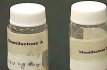 Hợp chất đắt hơn vàng 30 ngàn lần được tìm thấy từ cây lúa
