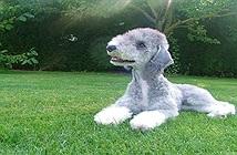 11 loài chó kỳ lạ nhất hành tinh