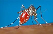 Các nhà khoa học đã phát hiện ra bí mật sự sống loài muỗi