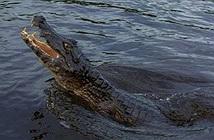 Ám ảnh kết người đàn ông khoe tài đi bộ trên sông cá sấu