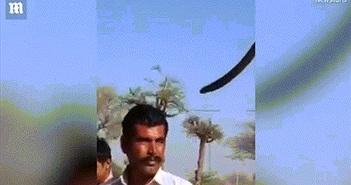Liều lĩnh chụp ảnh với rắn hổ mang, du khách chết thê thảm
