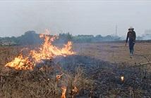 Vì sao nông dân đốt rơm rạ?