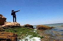 WWF: Địa Trung Hải sắp trở thành biển nhựa