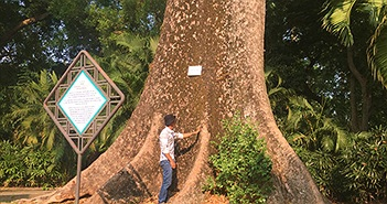 """Ly kỳ những """"cụ"""" cây quý hiếm ở vườn thú 155 tuổi tại VN"""