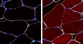 Tế bào gốc có thể được chỉnh sửa gene ngay bên trong cơ thể sinh vật sống