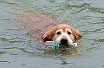 Chú chó liên tục nhảy sông vớt chai lọ bỏ thùng rác
