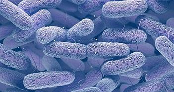 Loại khuẩn gây chết người trong 1 ngày này có thể bùng nổ khi kháng kháng sinh ập đến