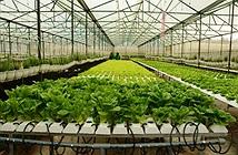 Nông nghiệp thông minh đem lại lợi nhuận lớn