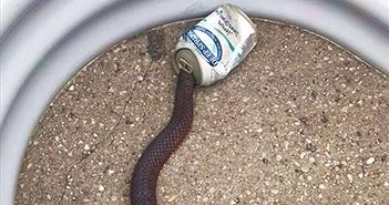 Cứu rắn kẹt đầu trong lon nước ngọt, thấy sự lạ