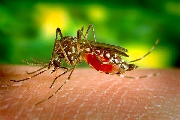 """""""Dị nhân"""" có thể giết muỗi cách xa 6 dặm chỉ nhờ xì hơi"""