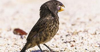 Khủng long bạo chúa chào thua trước sức cắn của chim sẻ