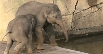 Xem voi anh dập tắt mánh lới của voi em cực yêu