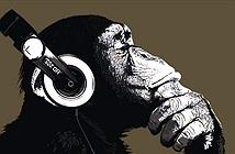 Choáng váng khả năng cảm thụ âm nhạc của tinh tinh