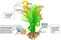 Tính toán nhu cầu phân bón của cây lúa bằng kỹ thuật ô khuyết