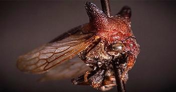 Một loài côn trùng mới được đặt tên theo ca sĩ Lady Gaga