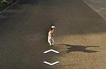 Hài hước với cảnh chú chó đuổi theo xe Google Street View không chịu buông tha