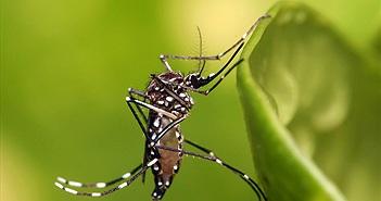 Lạ: Nơi có duy nhất 1 con muỗi, được ngâm rượu, trưng bày
