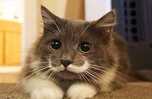 15 điều thú vị về ria mèo