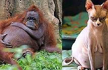 21 bức ảnh động vật khi mang bầu