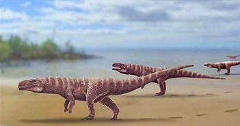 Phát hiện loài cá sấu tiền sử dài 3m đi bằng hai chân