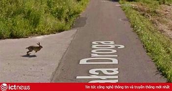 Google Street View ghi lại cảnh xe chụp hình đường phố đâm phải con thỏ lao qua đường