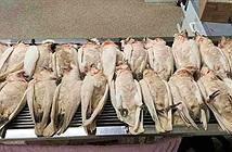 Vẹt mào trắng rơi xuống như mưa và chết hàng loạt ở Australia