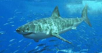 Sự thực bất ngờ khi bạn rơi vào vùng toàn cá mập