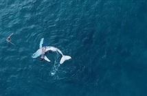 Video: Cá voi con trốn mẹ, ngửa bụng trêu đùa nữ thợ lặn