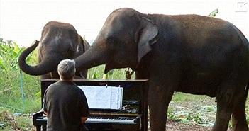 Video: Voi khuyết tật thích thú nghe đàn dương cầm