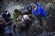 Tìm thấy xương voi ma mút khổng lồ ở Mỹ