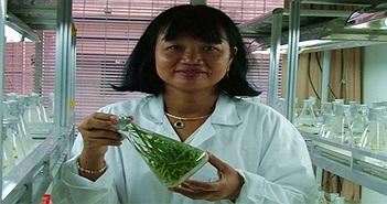 Giáo sư người Việt làm giàu cho ngân hàng gene lúa quý