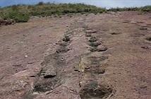 Vùng đất lưu giữ hàng nghìn dấu chân khủng long 80 triệu năm