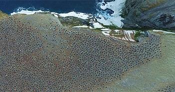 """""""Tổ bí ẩn"""" của 1,5 triệu con chim cánh cụt con người chưa từng biết đến"""