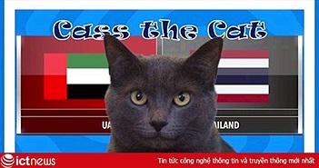 """Mèo Cass """"tiên tri"""" kết quả trận Thái Lan vs UAE tại ASIAN CUP 2019 hôm nay"""
