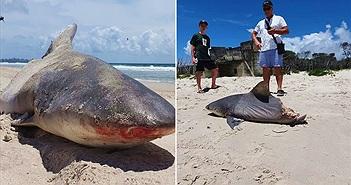 """Khiếp đảm cá mập đứt nửa thân, nghi quái vật """"khủng"""" xé xác"""