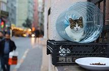 Istanbul: Thành phố mèo chia đôi bờ Âu - Á