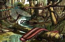 Tại sao côn trùng từ bỏ cơ thể to lớn thời tiền sử của chúng mà ngày càng thu nhỏ dần?