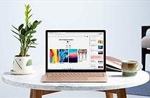 Surface Laptop 4 ra mắt: có cả chip AMD, Intel, giá từ 999 đến 2399 USD