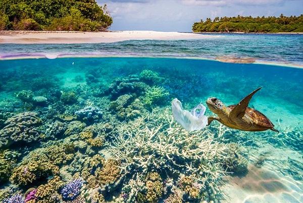 Cảnh báo ô nhiễm: Tìm thấy hơn 3.500 mảnh nhựa ở nơi sâu nhất đại dương