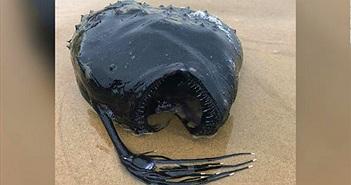 Phát hiện thấy quái vật sống dưới đáy biển bất ngờ dạt vào bờ